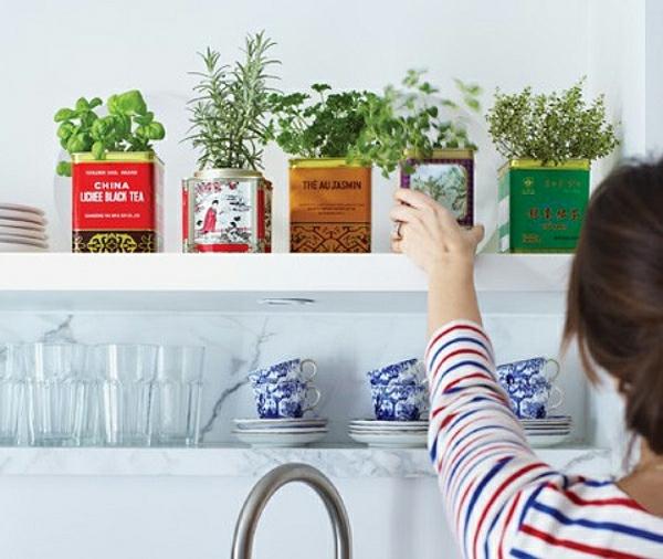 diy kr utergarten ideen indoor gardening vienna fashion waltz. Black Bedroom Furniture Sets. Home Design Ideas